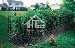 Rabbit & Dog Fence